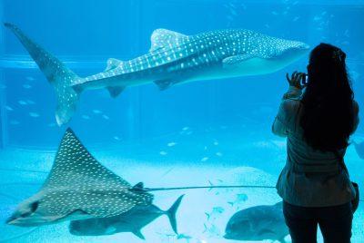 Osaka, 2016, Aquarium