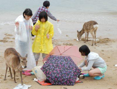 Die Insel ist bevölkert von handzahmen und sehr hungrigen Rehen. Die Strandgänger erfreut der Rehbesuch nur gering.