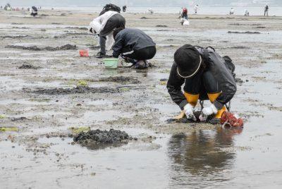 Miyajima, 2016, Muschelsuche während der Ebbe
