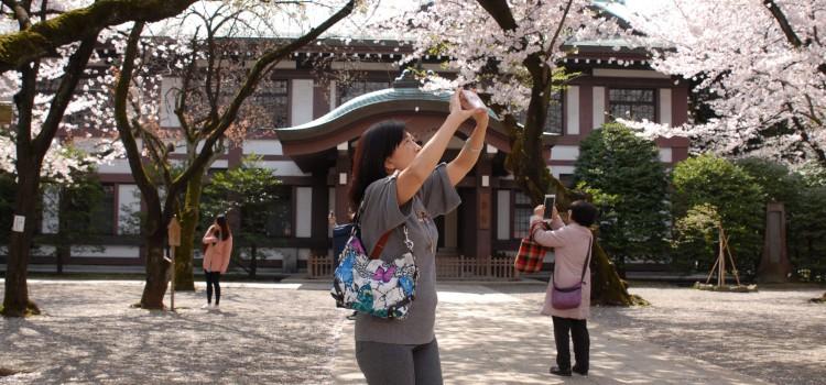 Hanami in Tokio Kagurazaka