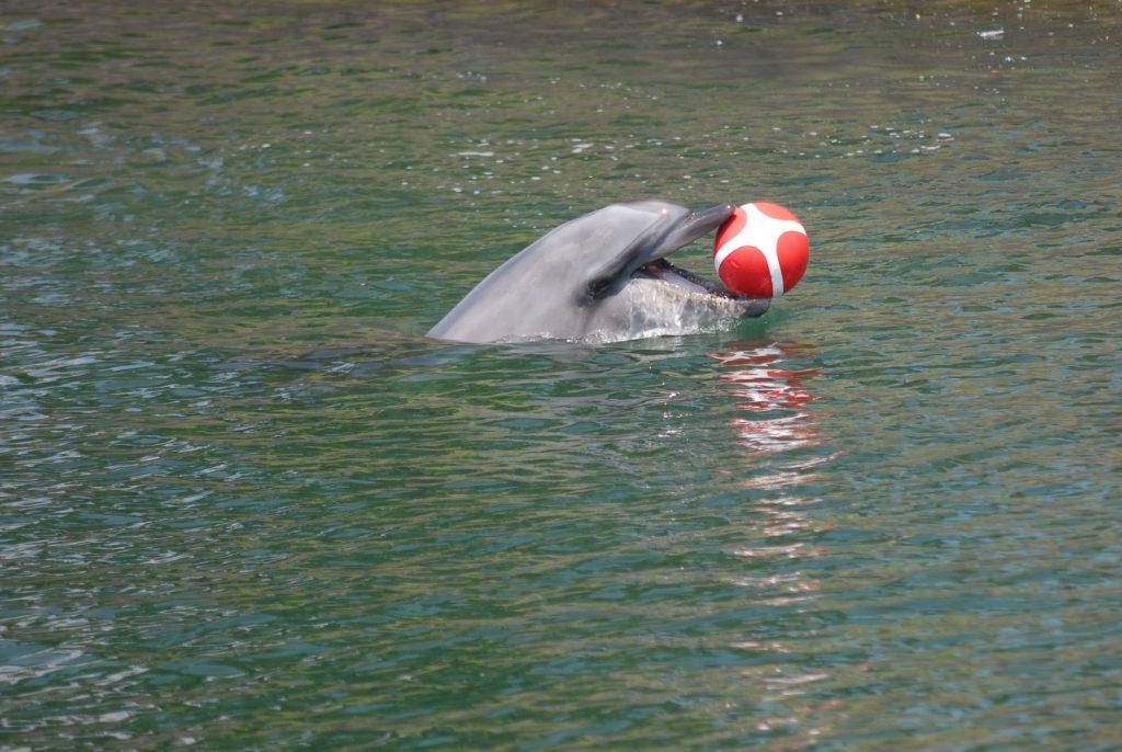 Kagoshima, 2016, Delfine