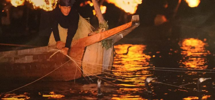 Komoranfischen in Gifu